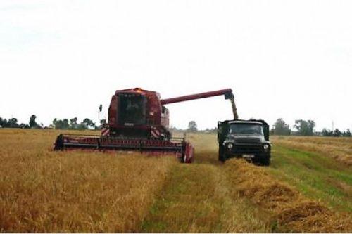 Молотильно-сепарирующая система и зерновой бункер