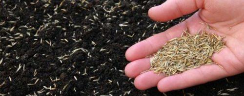 Виды сеялок газонной травы