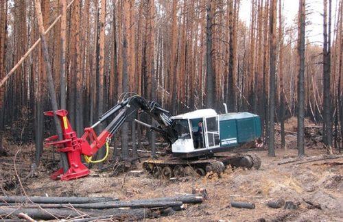 Валочно-пакетирующая машина «ЛП-19» с головкой с накопителем спиленных деревьев в захвате