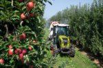claas: на российский рынок выведен узкоколейный трактор nexos
